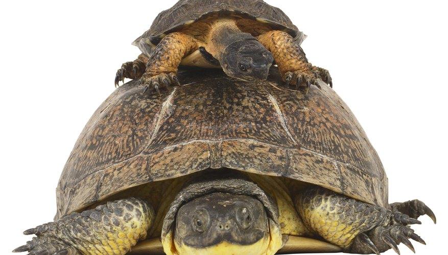 Haz un caparazón para un disfraz de tortuga.
