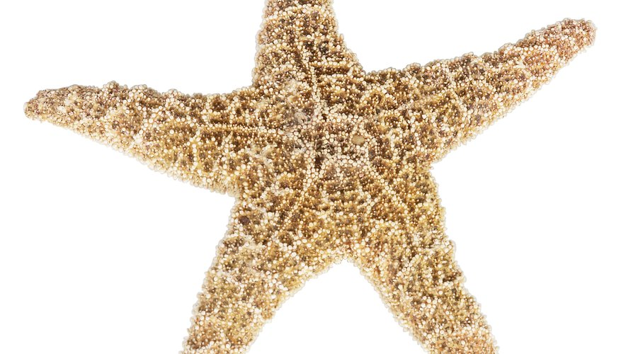 Starfish are usually found in or near sea water.