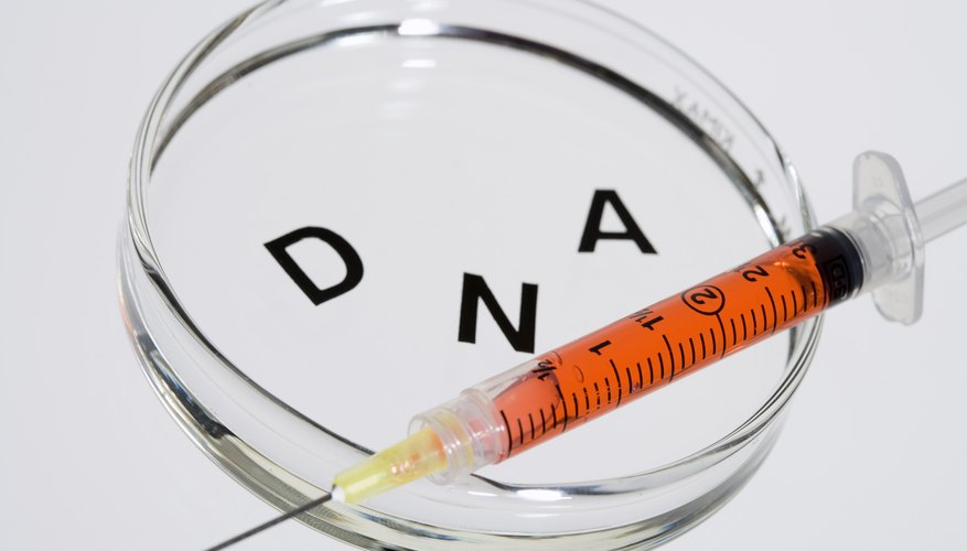 Theoretically, the same sequence of DNA would code for the same amino acids in any living thing.