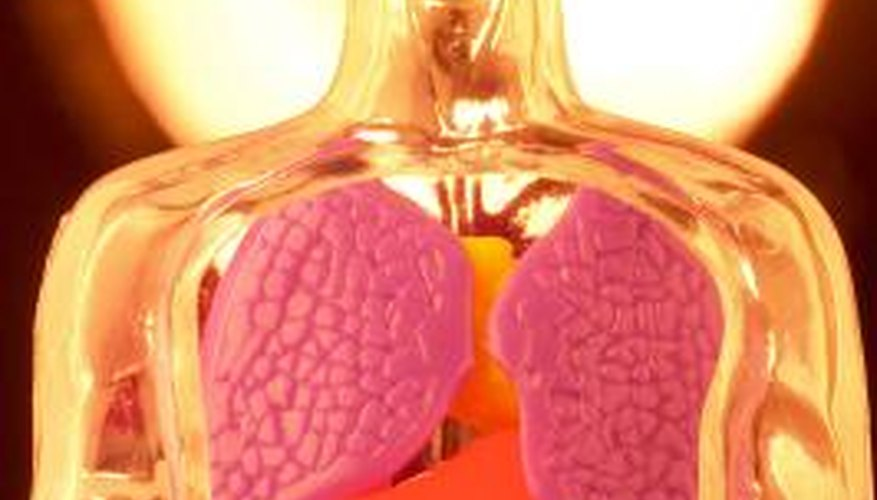 When many organ systems are formed together they create a living being.