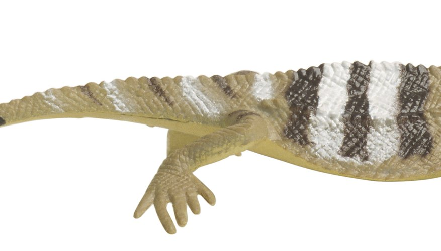 Take good care of an injured lizard to bring it back to good health.