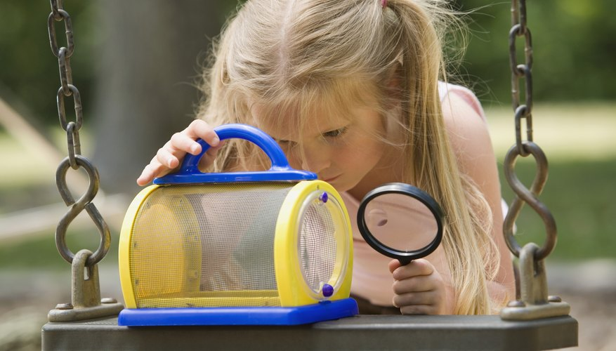 Curious kids can learn more about bugs at the Bug Museum.