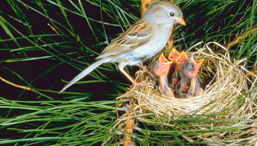 Longer days inspire birds to begin courtship and nesting.
