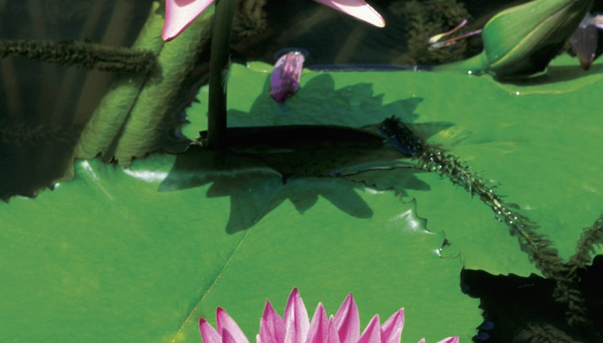 what animals live in freshwater biomes