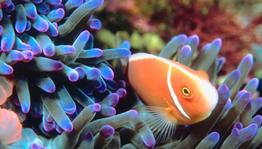 See underwater life at the Sea Life Minnesota Aquarium.