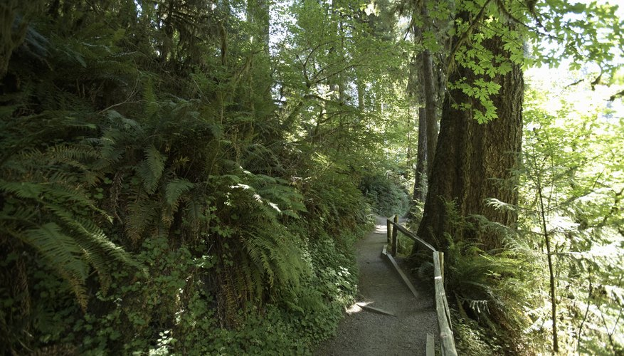 Temperate rainforests are rapidly dissapearing.