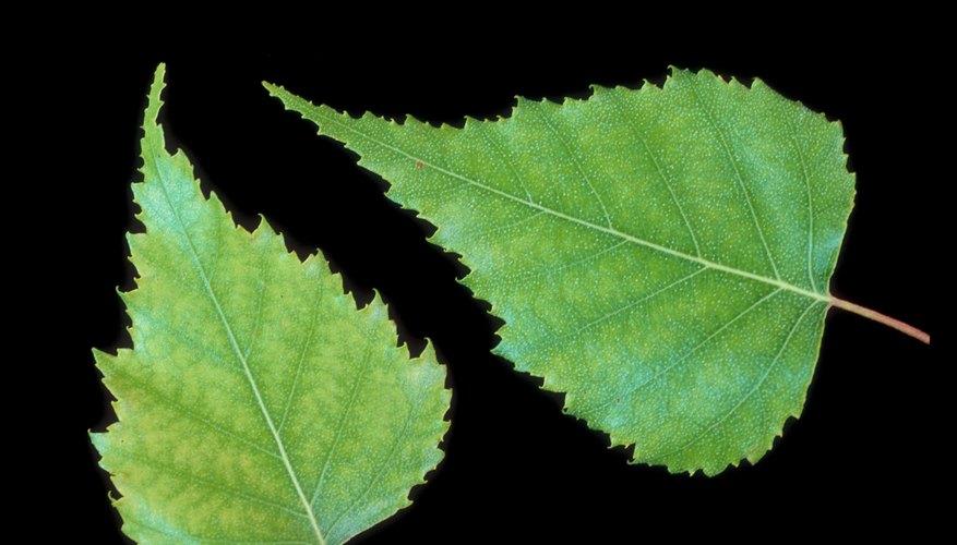 Types de motifs de feuilles