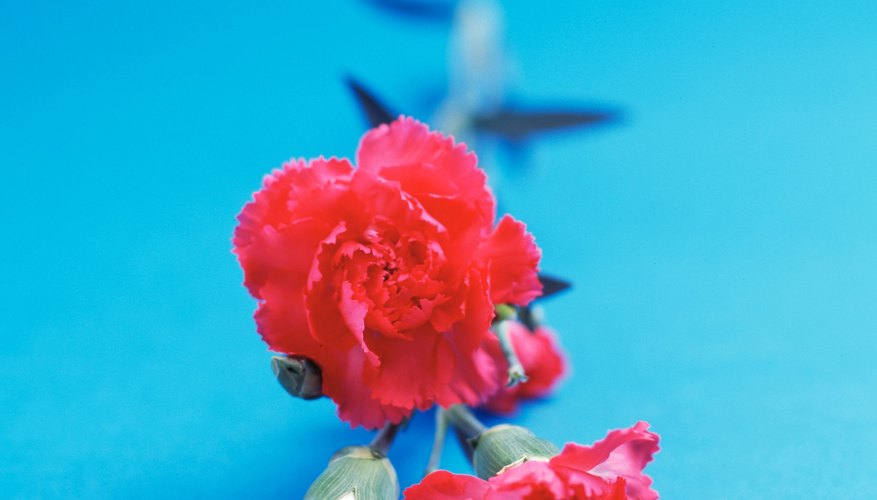 Make beautiful carnations out of crepe paper.