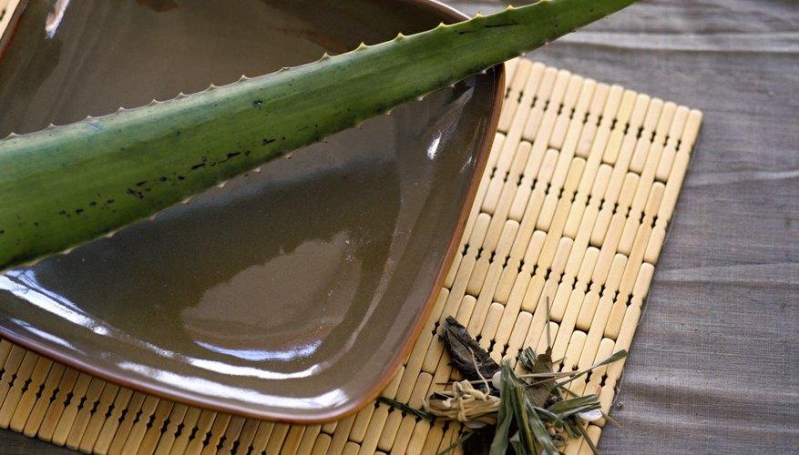 Aloe vera plant leaf.