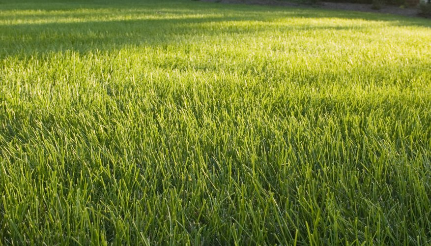 Keep your lawn lush and green with routine aeration.