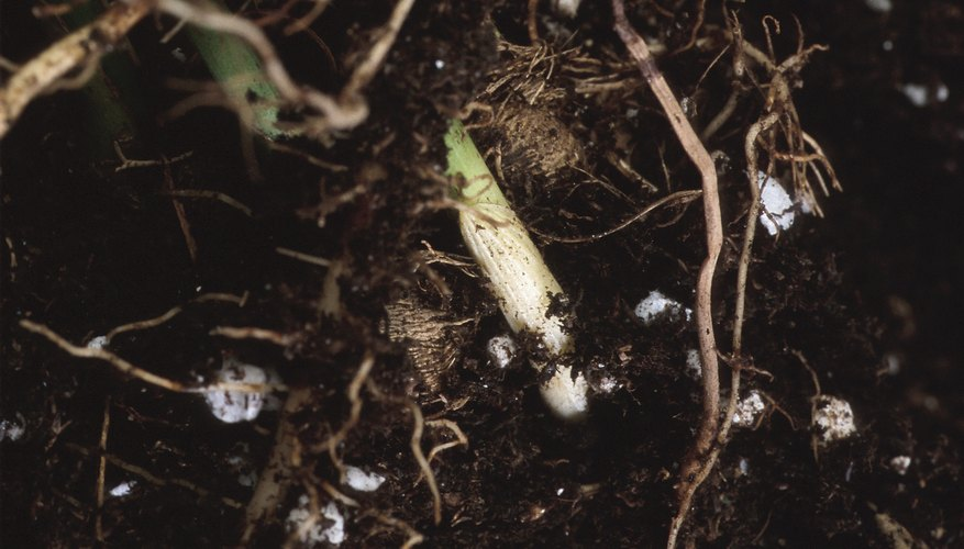 Signs of excessive fertilizer use include soil crust and root damage.