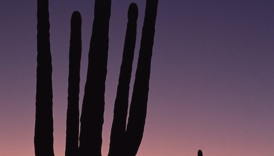 Arizona doesn't assess a state property tax.