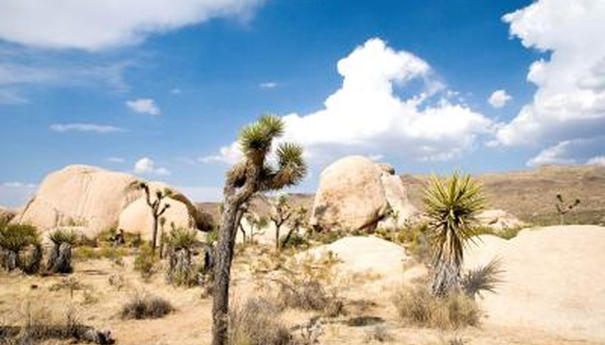 The hot desert is home to a variety of small and large animals.