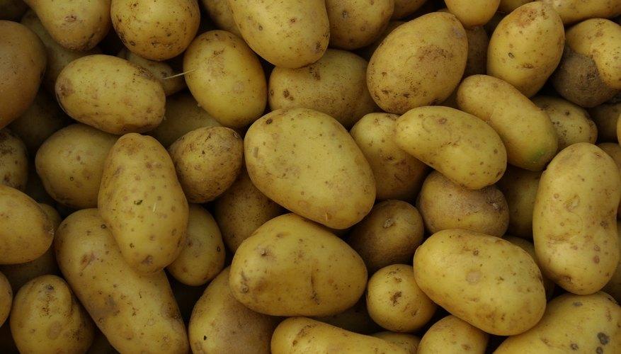 Osmolaridad celular vegetal a través del tejido de la patata.