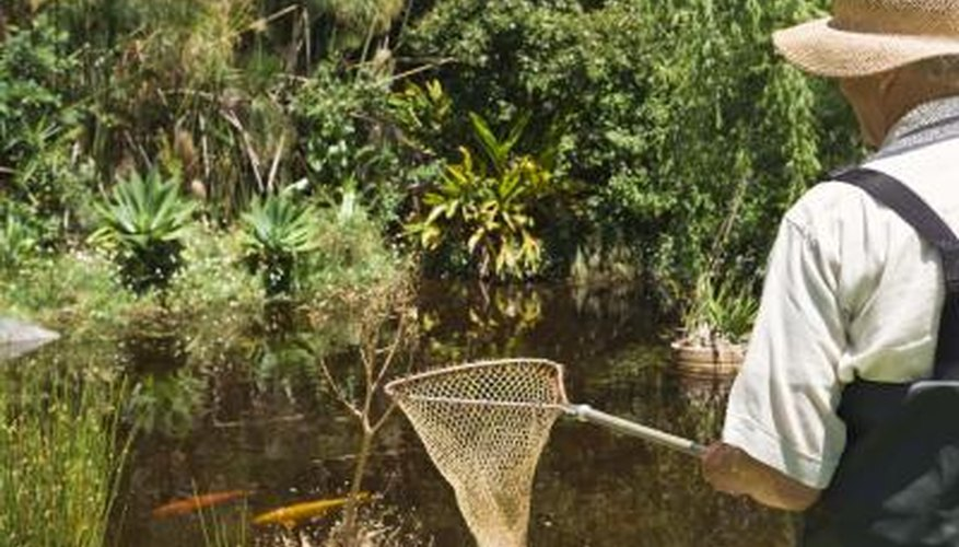 Remove fish before adding chemicals to your pond.
