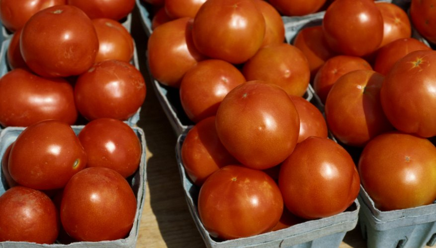 On average, one acre of tomatoes will produce slightly more than 1,500 25-pound cartons.