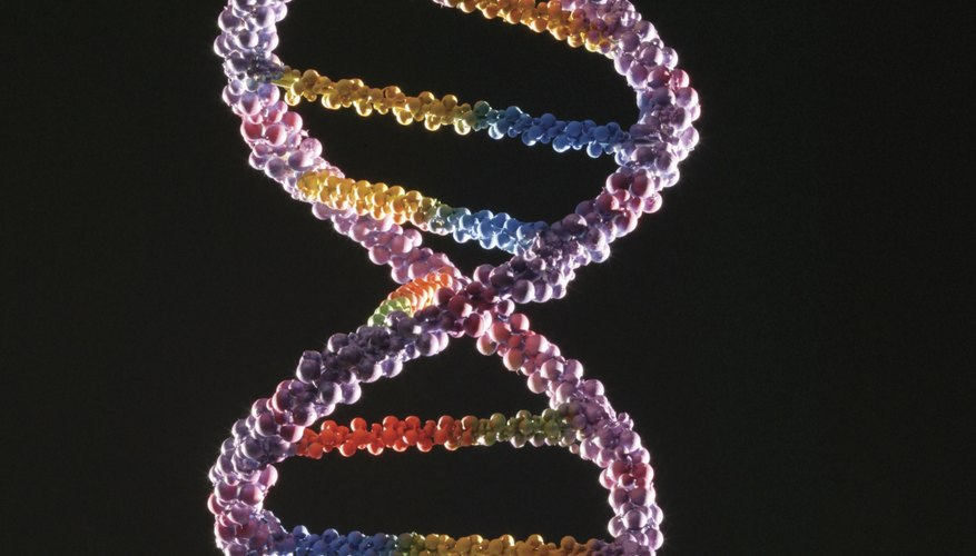 Some items in a DNA sequence serve mechanical, instead of biological, functions.