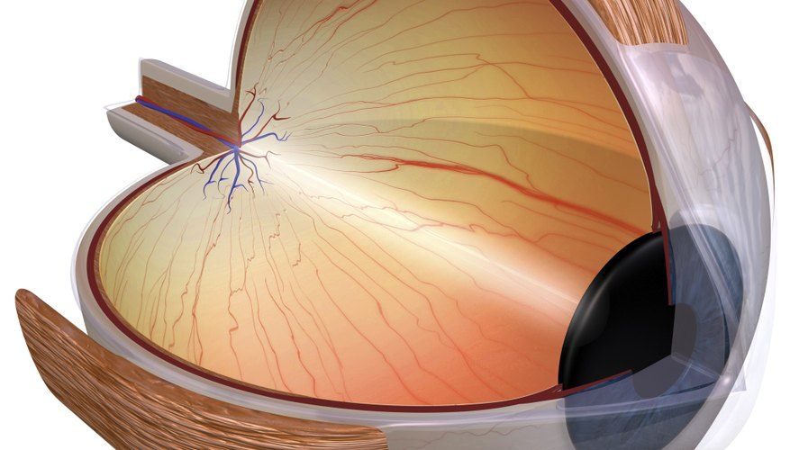 Information For Kids On The Human Eye How To Adult