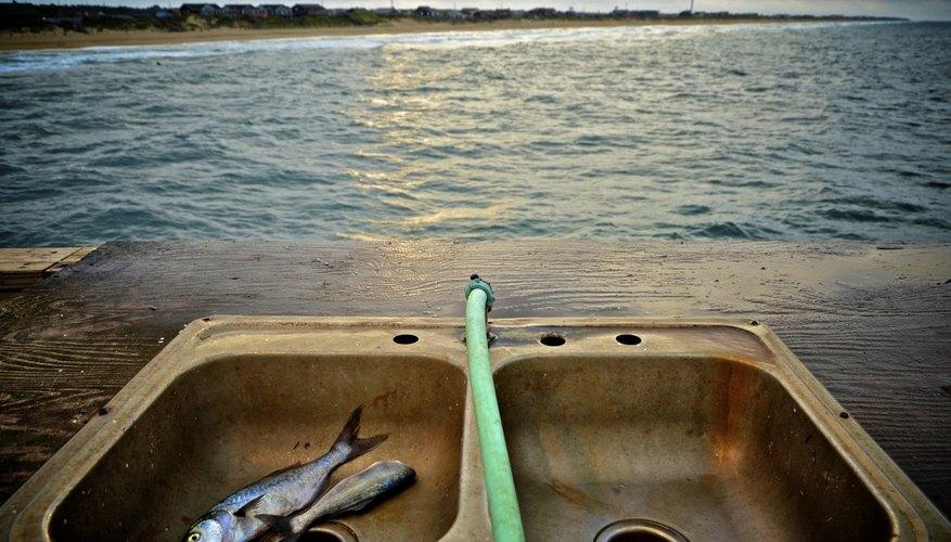 Fresh fish caught off pier in North Carolina