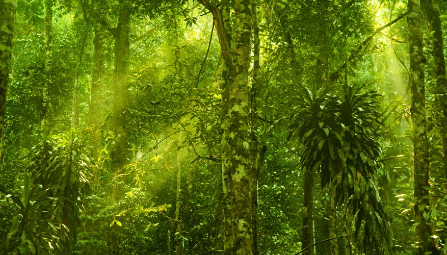 abiotic factors of a rain forest sciencing
