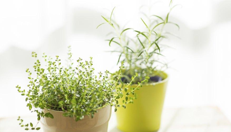 Si no tienes tiempo de cuidar tus plantas, puedes comprar artificiales.