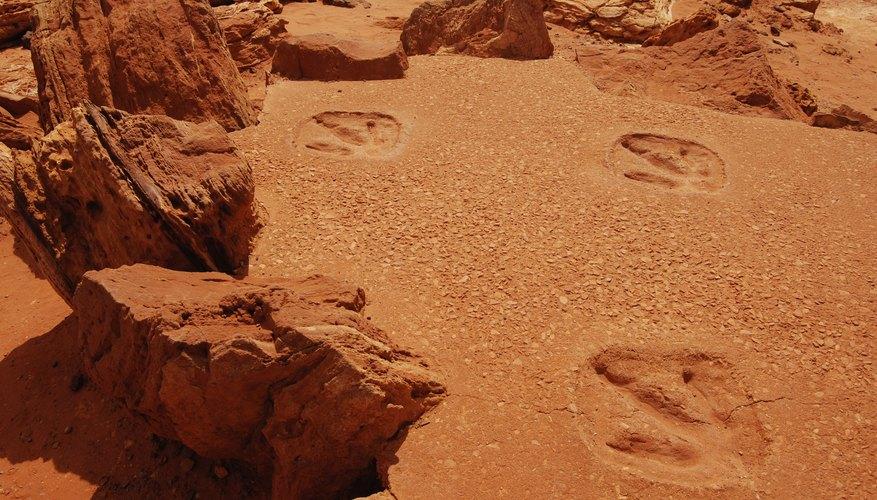 Imprint fossil tracks.