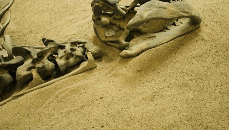 Hallazgos arqueológicos.