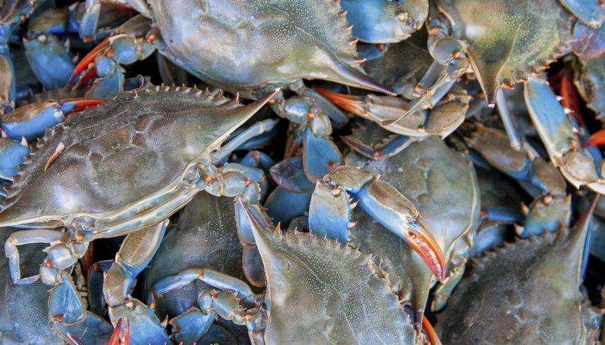 Blue Crab Fishing in Texas