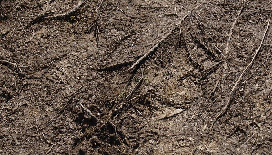 Uno de los factores que influye sobre este tipo de agricultura es el tipo de suelo.
