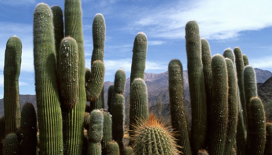 The species that live in an ecosystem are often uniquely adapted to the that ecosystem, such as thorny and succulent plants in a desert.