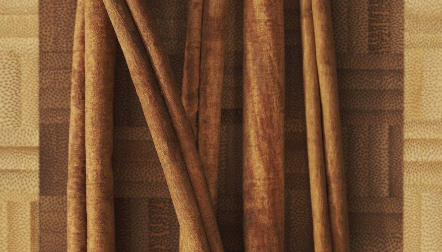 Comienza escogiendo el patrón de tu manualidad de ramas de canela.