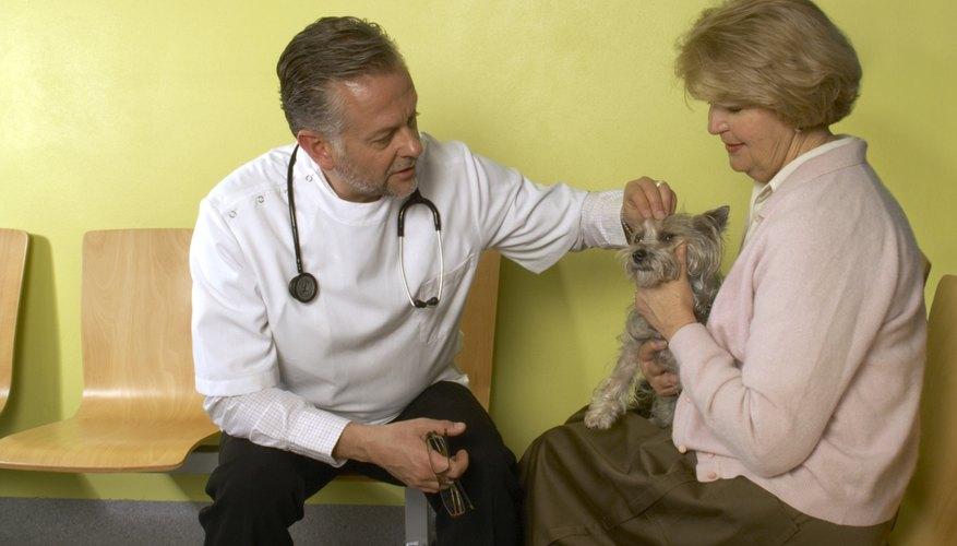 La tiña no mejora por sí misma, por lo tanto, se necesita el tratamiento inmediato de un veterinario.