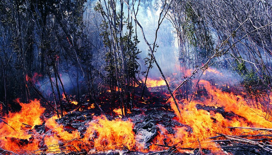 Fires occurring in nature can restore ecological balance and facilitate regeneration.