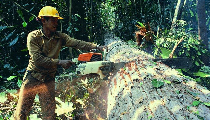 La tala descontrolada es una de las razones principales de la desaparición de muchas especies.