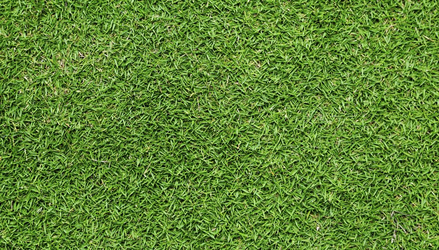 Bermuda grass tolerates high traffic when it's actively growing in spring, summer and early fall.