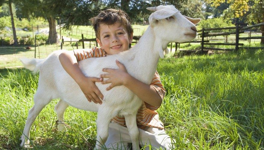 La zona de Hickory Hills tiene mucho para mantener a los niños ocupados, de las visitas a una granja en cuando a un parque de diversiones.