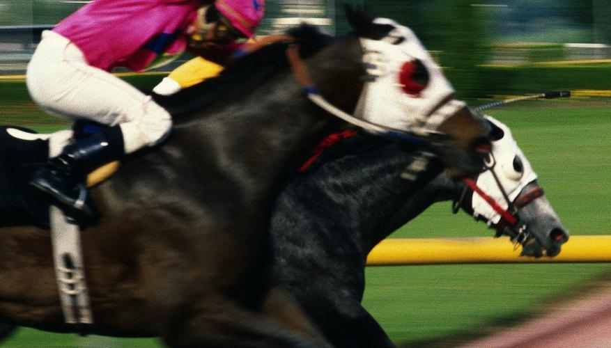 Los caballos de carreras usan anteojeras para centrar su atención en la tarea en cuestión.