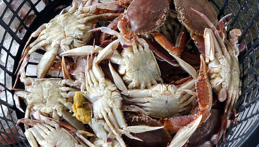 Crab Fishing in Georgia