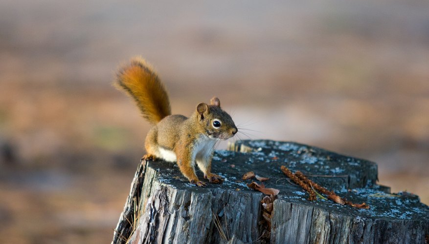 Squirrel lead an active life.