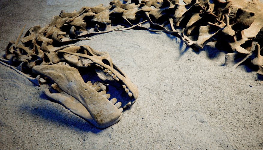 Changes in Earth's atmosphere might have caused the Triassic mass extinction .