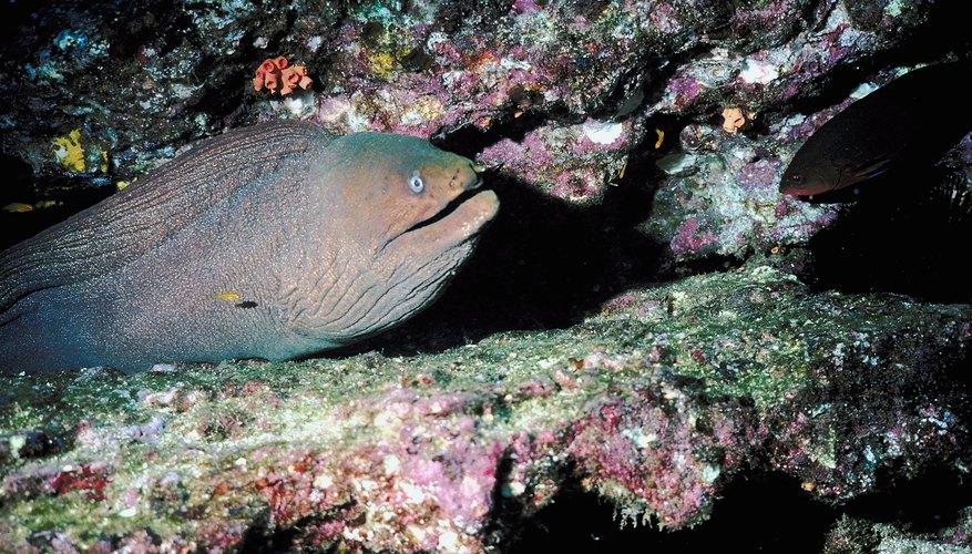 Eel in the depths