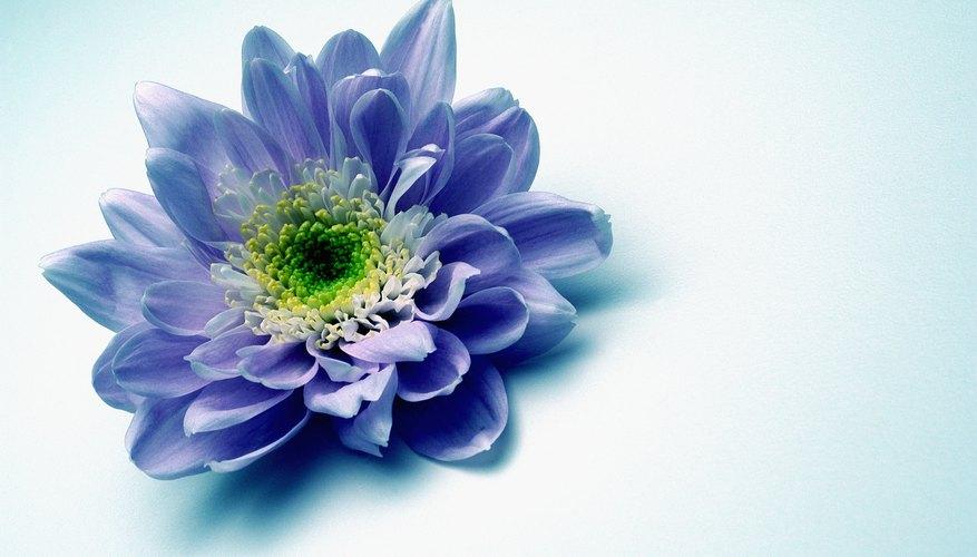 Usa bellas flores frescas para hacer una corona hermosa que adorne tu cabeza.