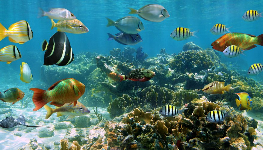 fish are the most diverse species in the animal kingdom