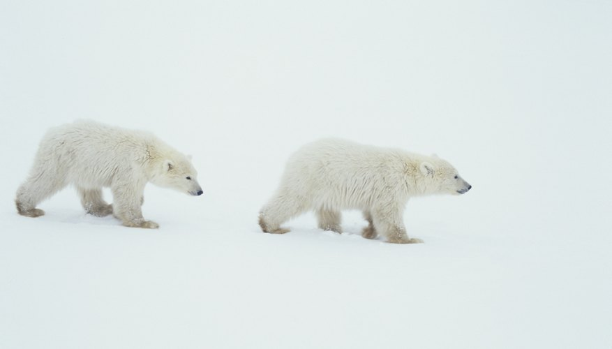 Wildlife is among the natural resources of northern polar regions.