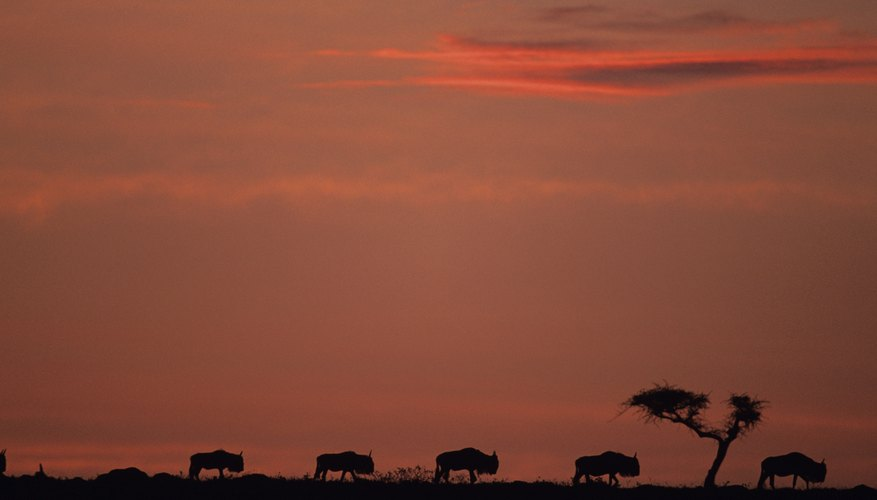 Sunset on the tropical scrub forest landscape in Kenya