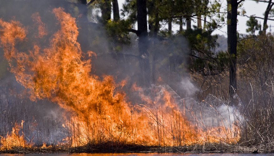 Marshes may be at risk for fires.