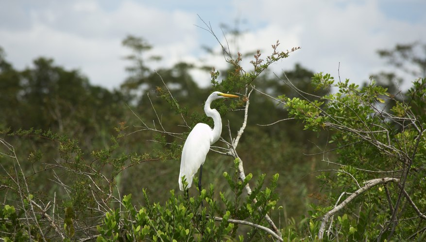 An egret in an Atlantic coast marsh.