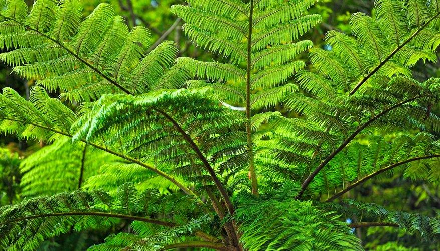 A fern plant.