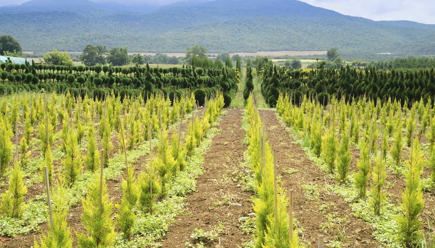 essay plantation Tree plantation since the dawn of civilization man has a close relation with nature trees are the most important gift of nature they have made friendship with our life.
