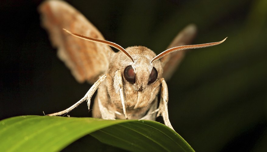 Brown moth on a leaf.